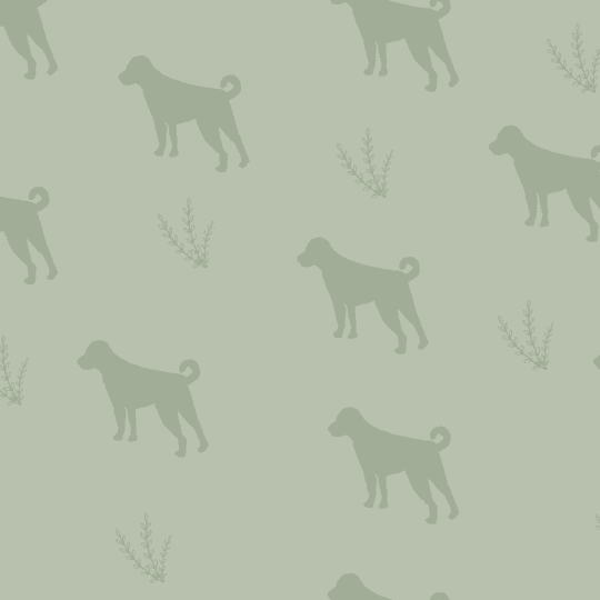 Forest tails dog groomer branding-logo design and brand design by be more you